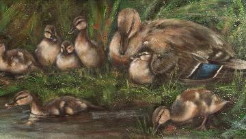 baby duckling litter,Anas platyrhynchos,sinisorsapoikue, siipipeili