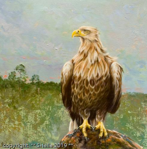 kotka,eagle,