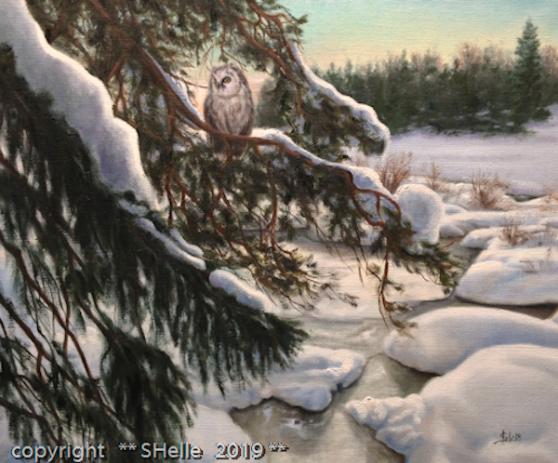 Pöllö,talvi,owl,winter