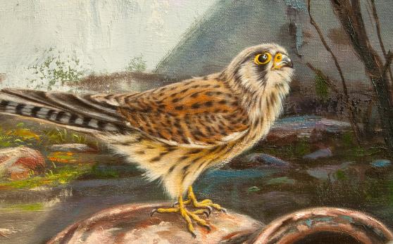 kestrel,tuulihaukka,Falco tinnunculus