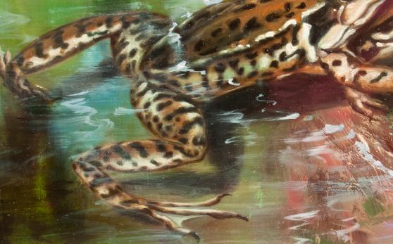 Sammakot,lammikko,frogs,pond
